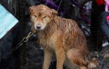 It's not just people without shelter in the Virgin Islands. Here a dog is drenched as it sits patiently through another downpour of rain, in Frederiksted, St. Croix, US. Virgin Islands September 30th 2017.