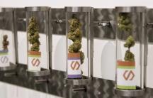 Marijuana displayed at a store