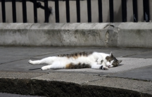 Larry the Downing Street cat lays on the pavement, in central London, Britain July 13, 2016.