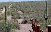 Cacti line a desert roadway