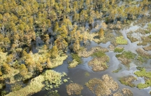 Wetlands and woods are saturated with oil, north of Lake Pontchartrain, after Hurricane Katrina struck in 2005.