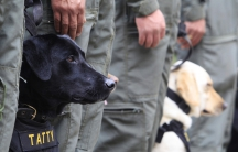 Bomb sniffing dogs stand at attention before a training routine at the army's School of Canine in Bogota, November 22, 2010.