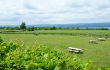 This is a view of vineyards on Seneca Lake in New York.
