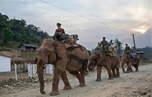 Myanmar Kachin war elephants