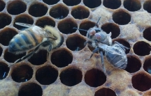 bees 1