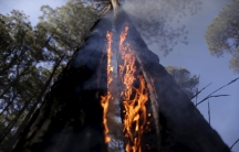 A tree on fire is seen as wildfires blaze near the Paranoa neighborhood in Brasilia July 29, 2015. Drought, high temperatures and low humidity in areas have caused wildfires to start in several places in Brasilia, according to officials.