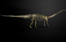 The diplodocus fossil named Misty.