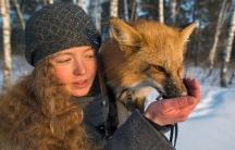 Irina Mukhamedshina feeds her fox, Viliya. One of the fox's tricks is to jump on Irina's shoulder.