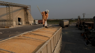 An employee takes samples of corn imported from Brazil for a quality test at a warehouse in the terminal port of Portimex in Tuxpan, in Veracruz state, Mexico, Feb. 21, 2018.