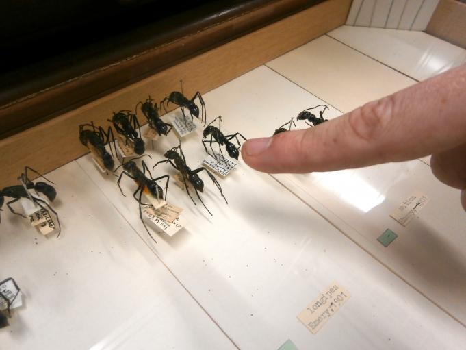 Close-Up Photos of Ants Show Species Diversity | Public