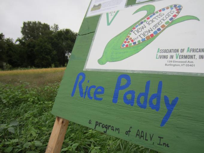 The Bhutanese rice paddy is a project of the Association of Africans Living in Vermont, a Burlington-based nonprofit serving refugees from all over the world.