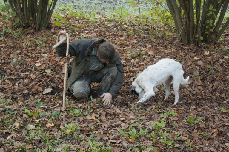 Truffle hunter Walter Tedesco waits for his dog Leo, to pick up the scent of the truffle.  Truffle-hunting dogs are chosen and trained from birth.