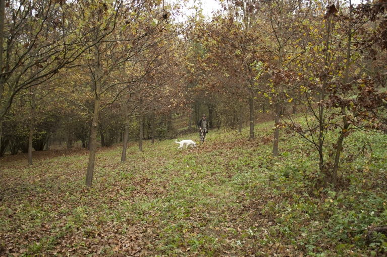 Truffle hunter Walter Tedesco and his dog Leo scout a forest in Piedmont Italy for the elusive white truffle.