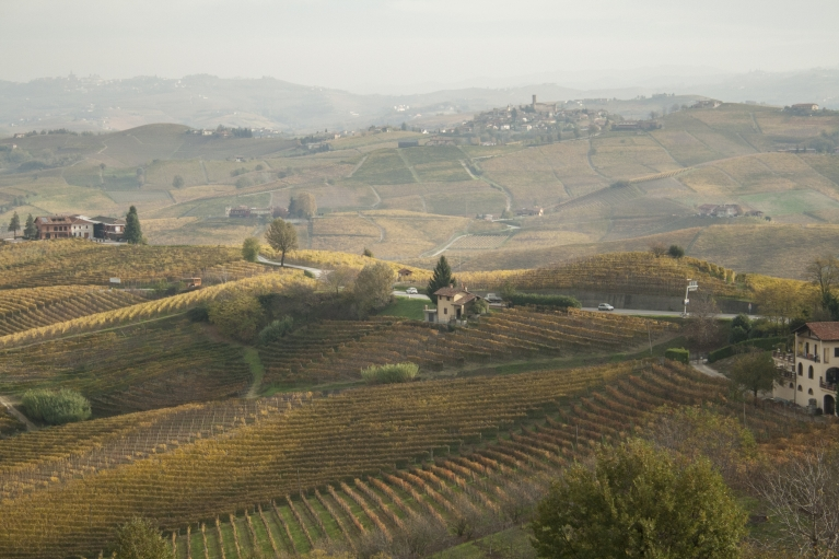 The Piedmont region, near Alba, where white truffles sprout during the months of October and November.