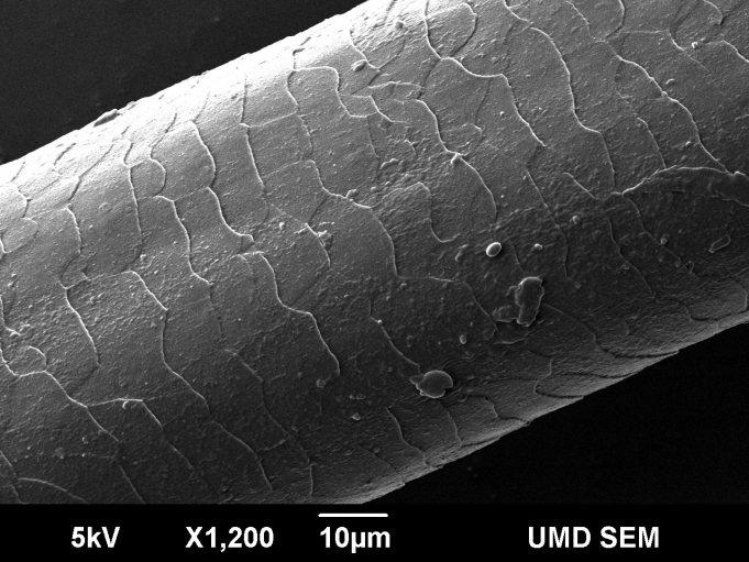 Scientists Use Electron Microscopes And Chemicals To Shape