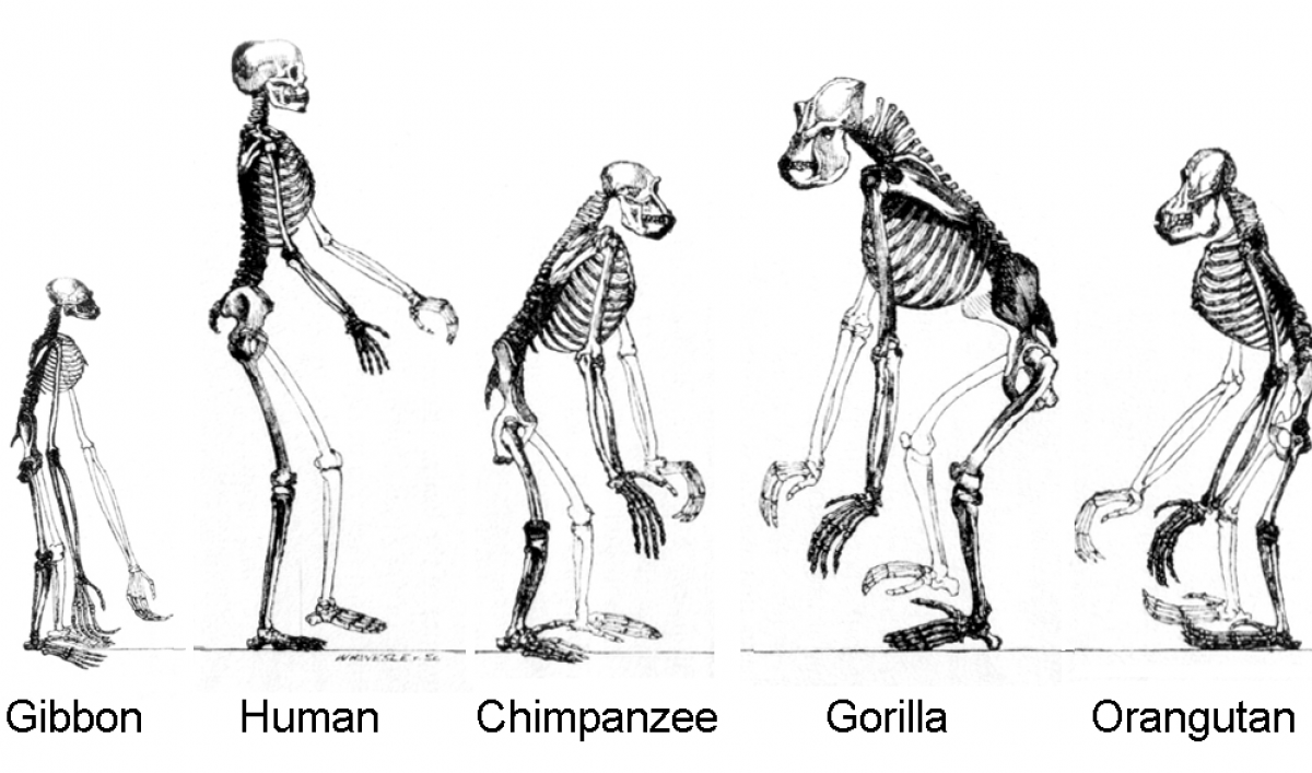evolutionary biololgist neil shubin explains how so much of human evolution is connected to fish
