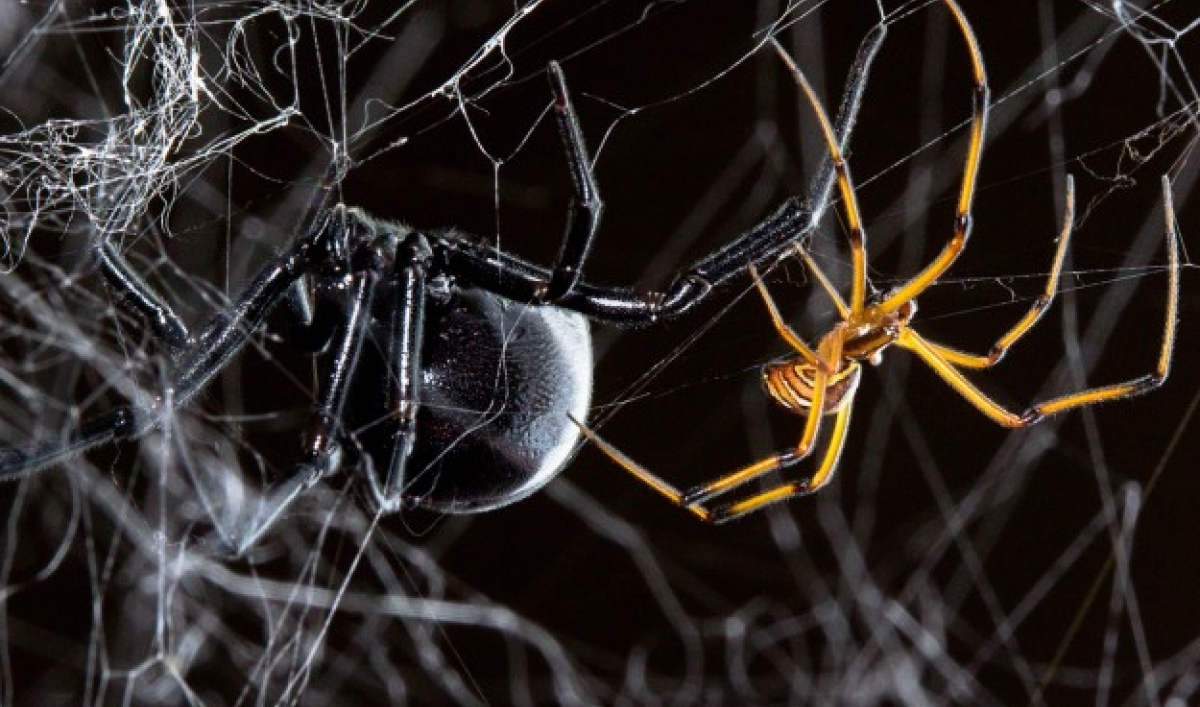 Eight Things Spiders Can Do That You Ve Never Heard Of