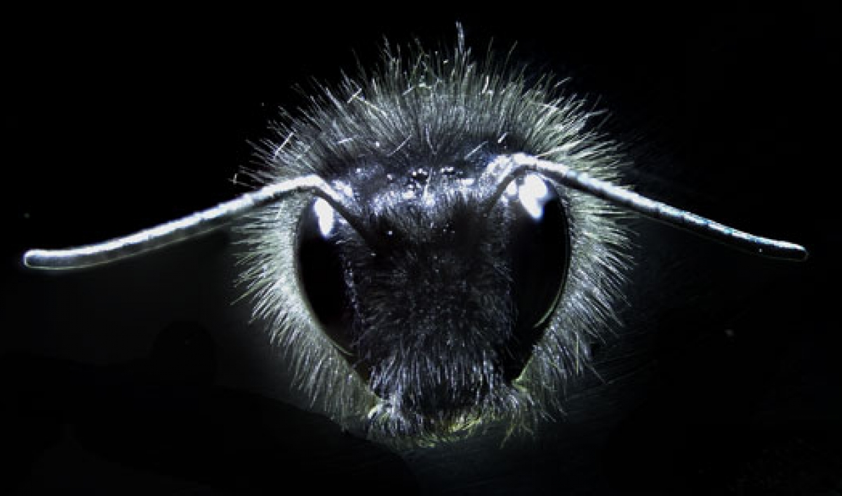 flowers give off electrical signals to bees public radio