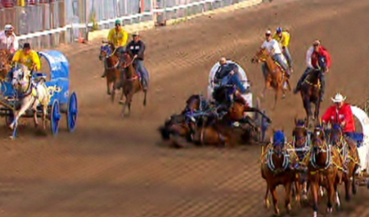 3 Horses Killed In Calgary Stampede Race Video Public