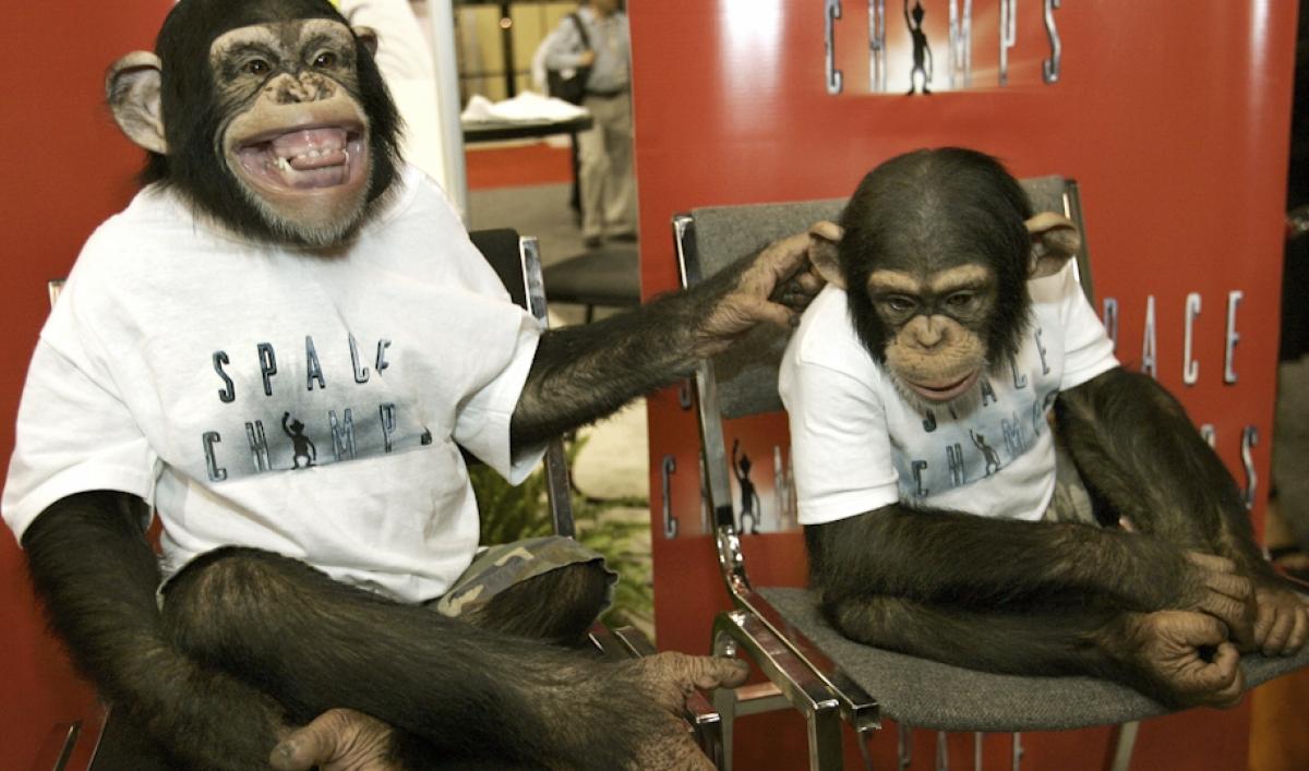 искать обезьяна в парикмахерской картинки лакомство дрожжевого