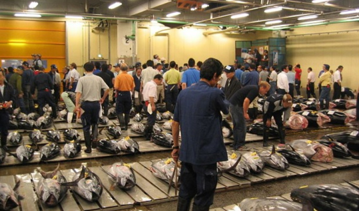 Bidding for tuna at the biggest fish market in the world for Bud s fish market