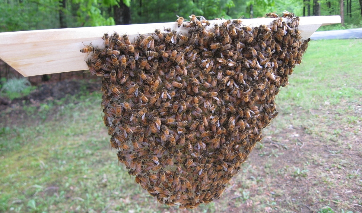 Russians and Italians Will Have to Get Along in My New Bee Colony