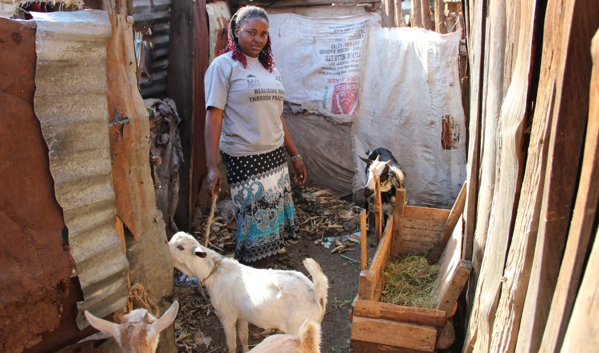 Farming Livestock In African Slums The World From Prx