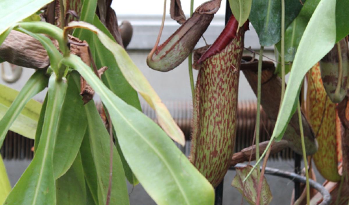 Canadian Scientists Suggest Plants Show Altruistic Behavior