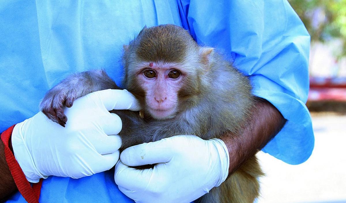 Игровой автомат Monkey King  Король обезьян играть в
