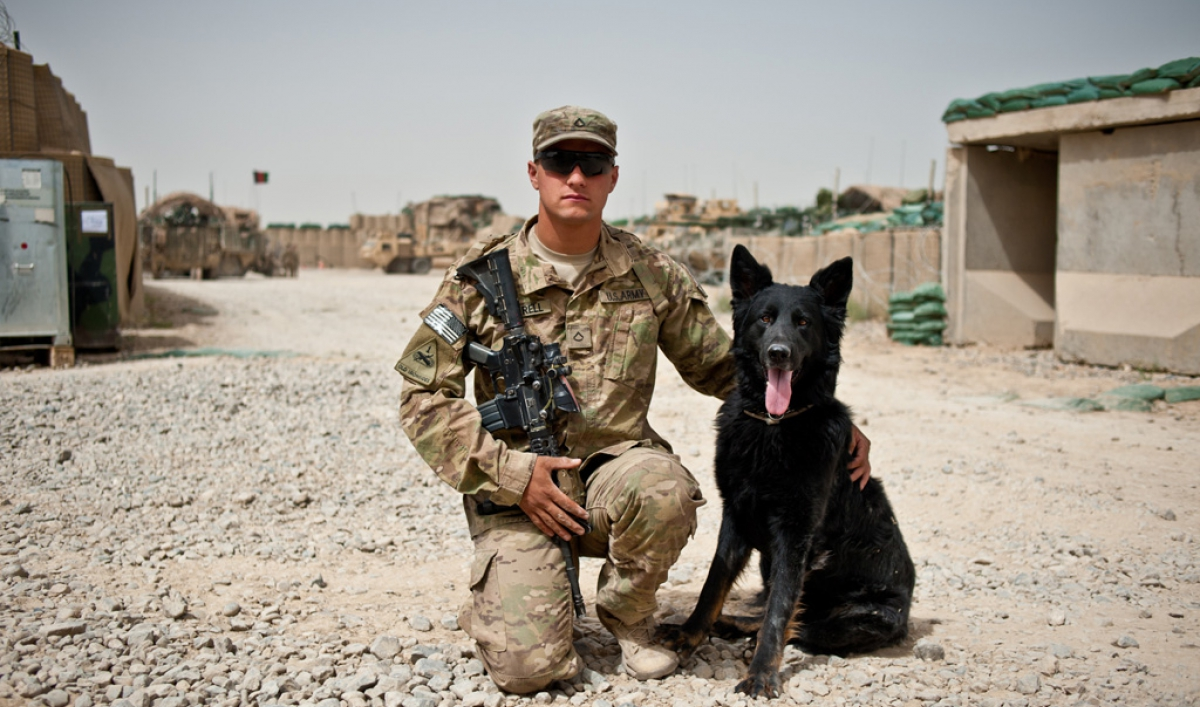 A Soldiers Best Friend Military Dogs In Afghanistan Public Radio