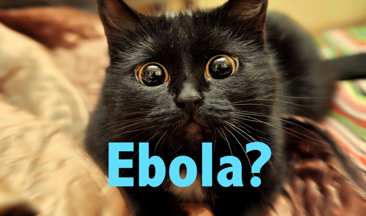 Let these 20 nervous animals teach you the reality of the Ebola 'threat'