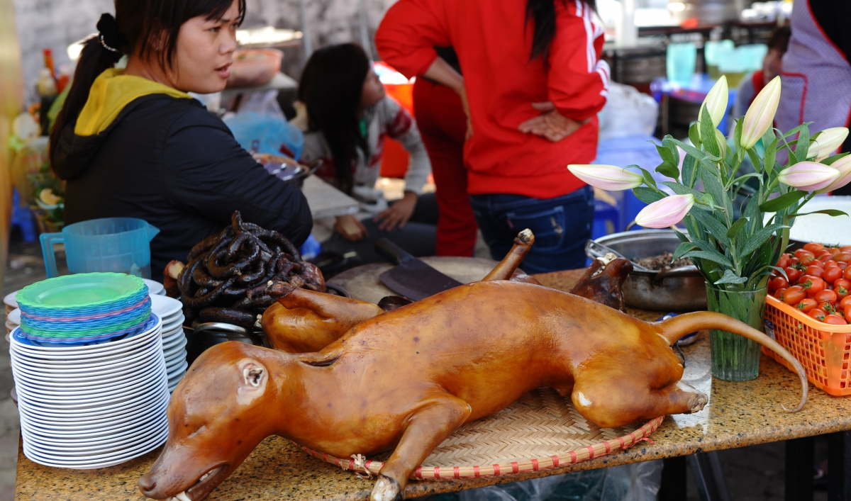 Eat, Prey, Love: Vietnam's dogs double as family members and dinner