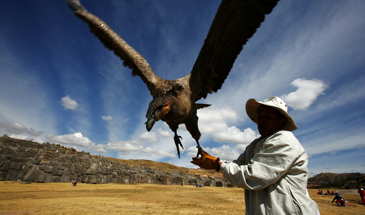 The Andean Condor Is In Trouble The Reasons Are Known And Preventable The World From Prx