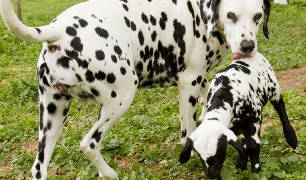 Interspecies love: The 30 most unlikely, adorable animal pairs