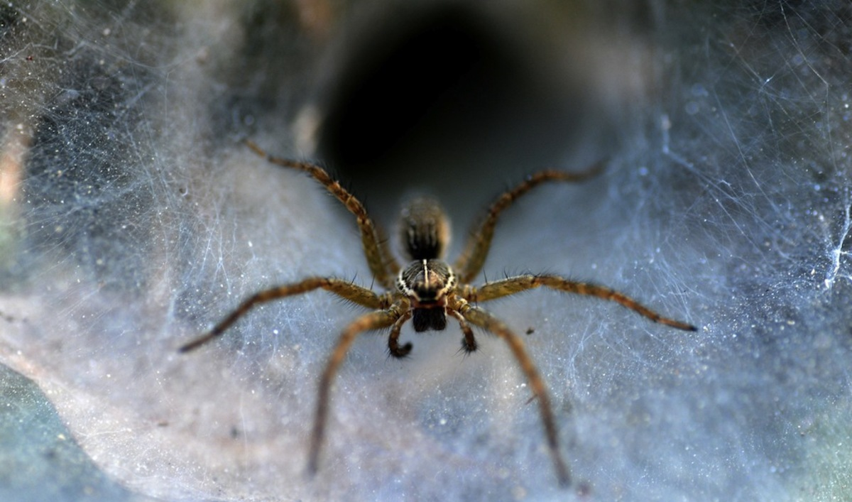 Spiders use 3D vision to pounce on prey | The World from PRX