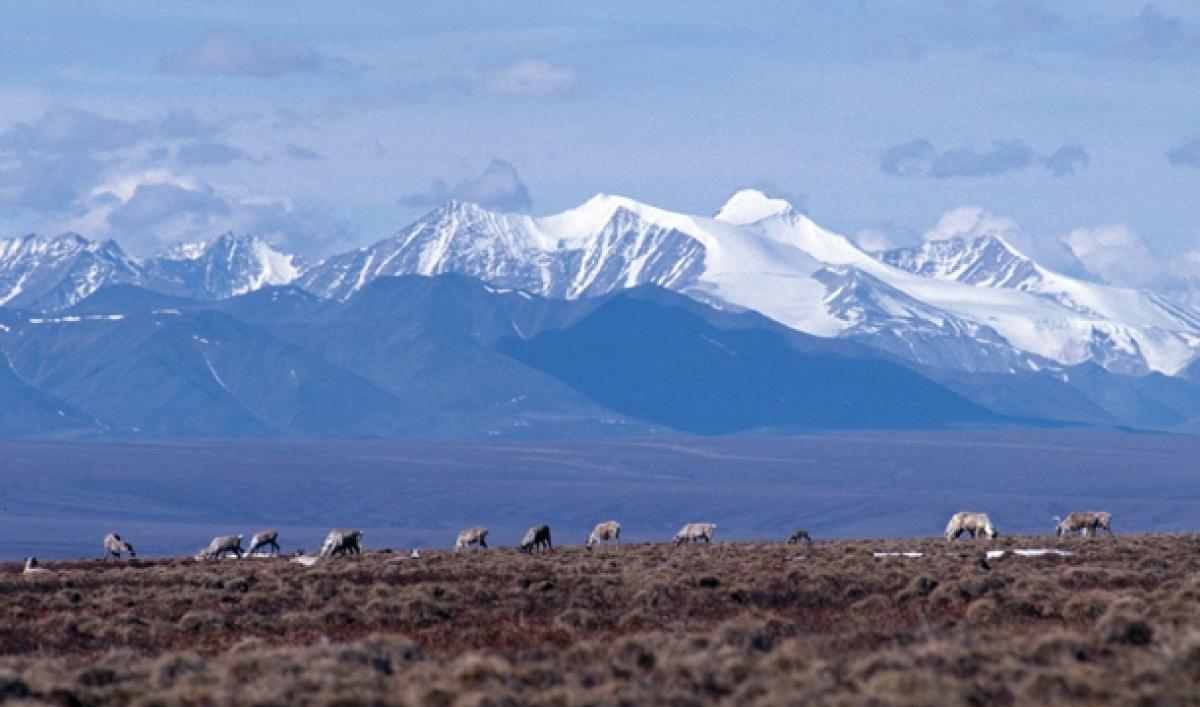 case study the arctic national wildlife