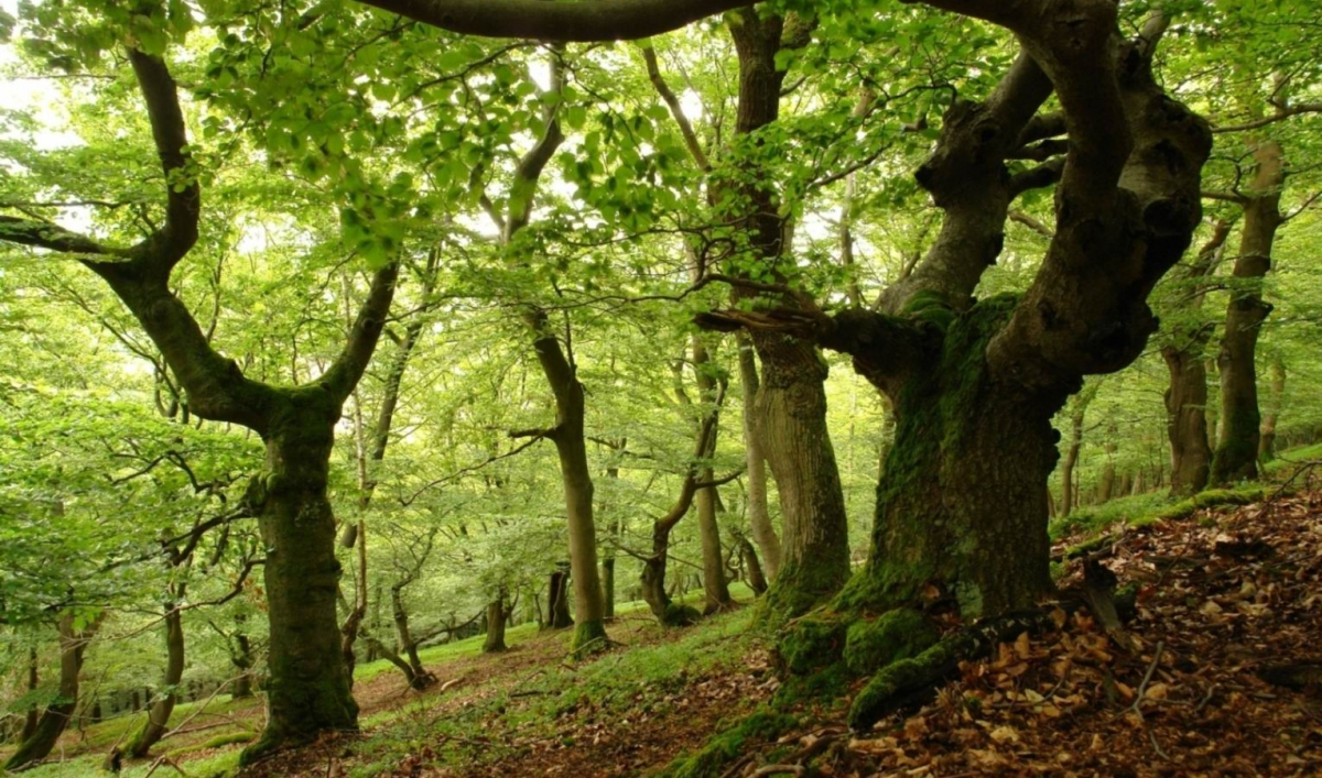 The Hidden Life Of Trees Asks Us To Rethink Our