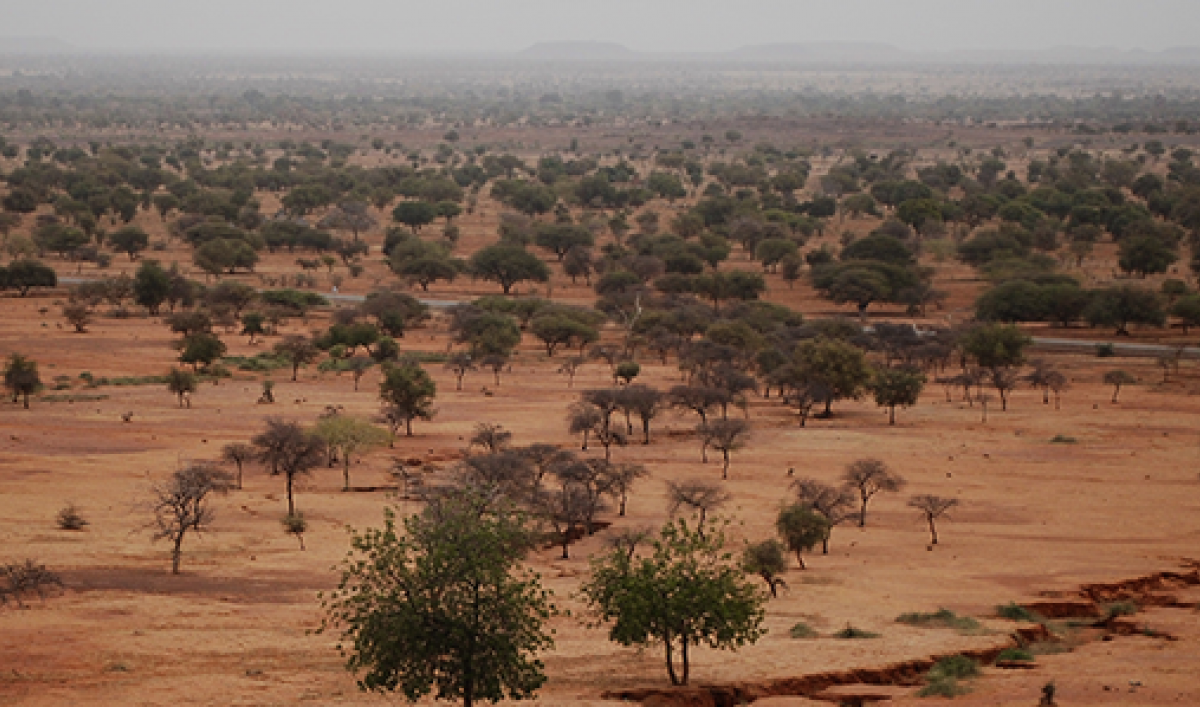 africa u0026 39 s great green wall is making progress on two fronts