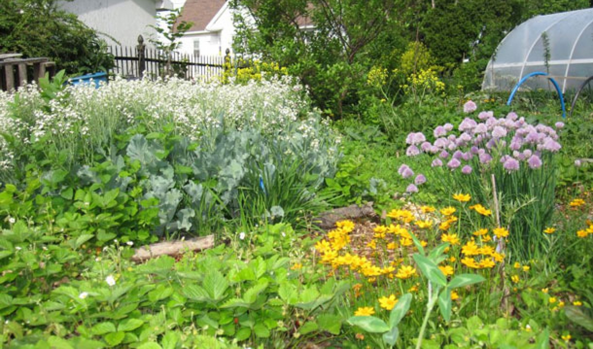 How A Permaculture Garden Led To A Bountiful Harvest And