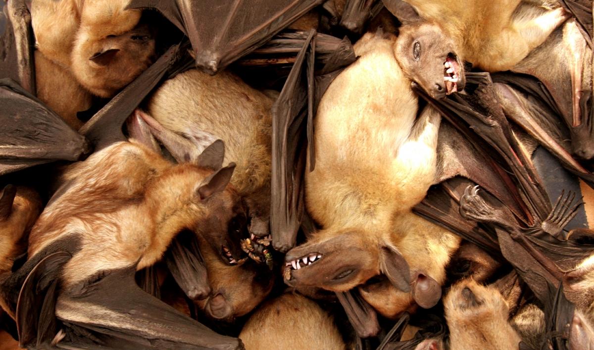 Liberia Uncovers Ebola In Bats
