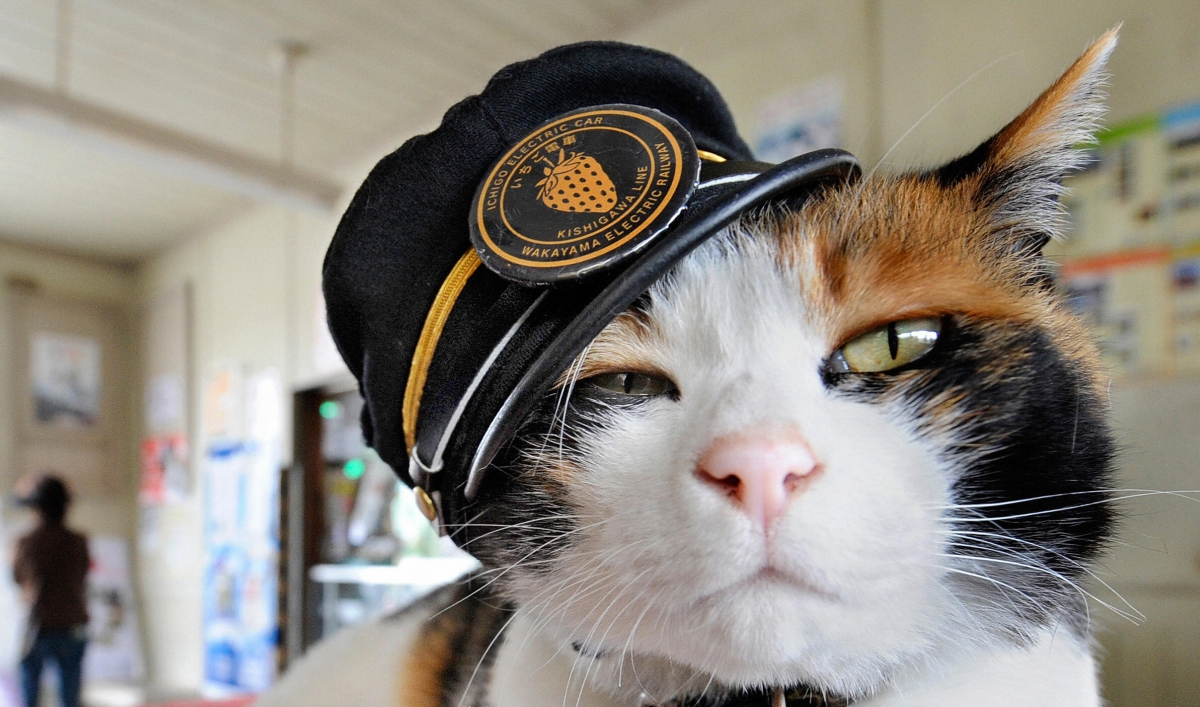 remembering tama a calico cat who was a stationmaster and loved