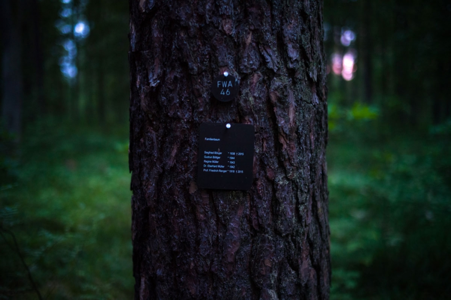 "Tree number FWA 46 at the FriedWald Furstenwalde burial forest carries the label of a ""family tree."" In this cemetery an hour east of Berlin, clients buy a burial spot at the base of a tree. Upon death, the person's cremated remains are buried in a biodeg"