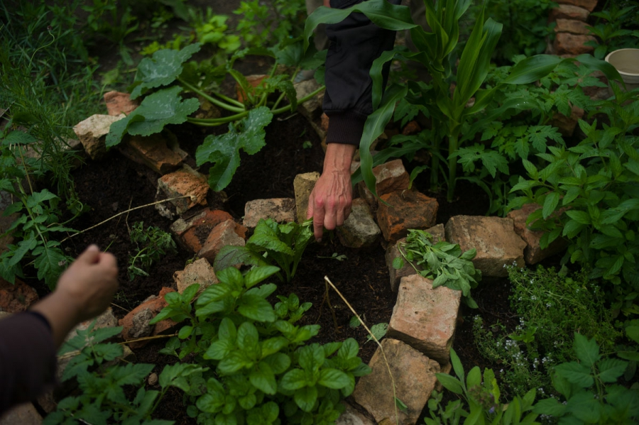One of the gardeners who manages the space reaches for some herbs in a special bed off to the edge of the garden. The boundaries of the garden beds and plots are often marked off with brinks and stones that were once the foundations of the grave markers t