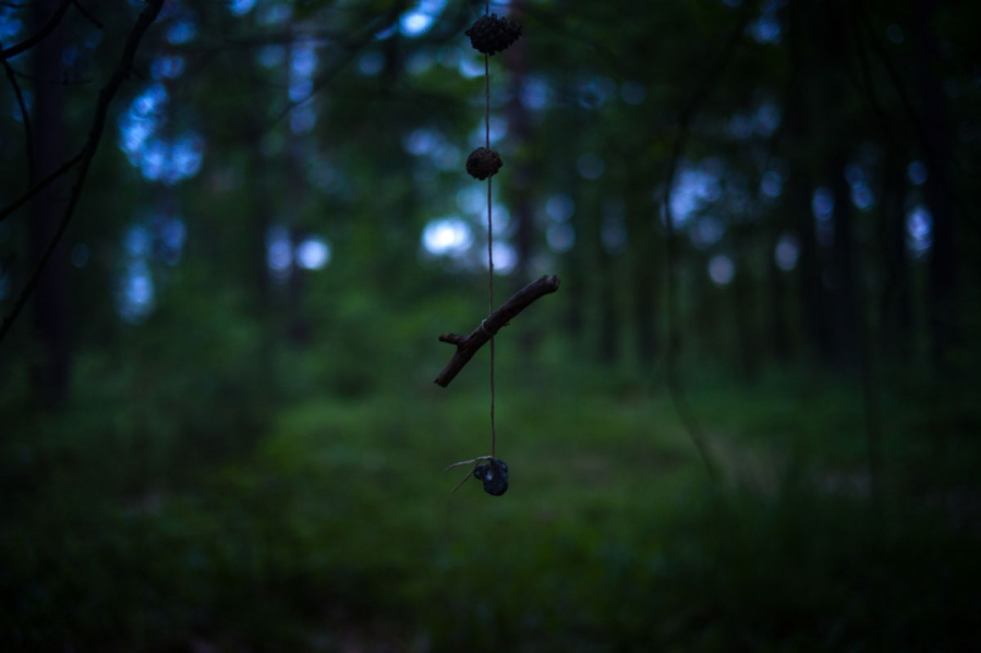 A small mobile hangs from a tree in the FriedWald Furstenwalde burial forest. Though graves are not meant to be decorated, some mourners dress the burial sites with small, personal trinkets like this one.