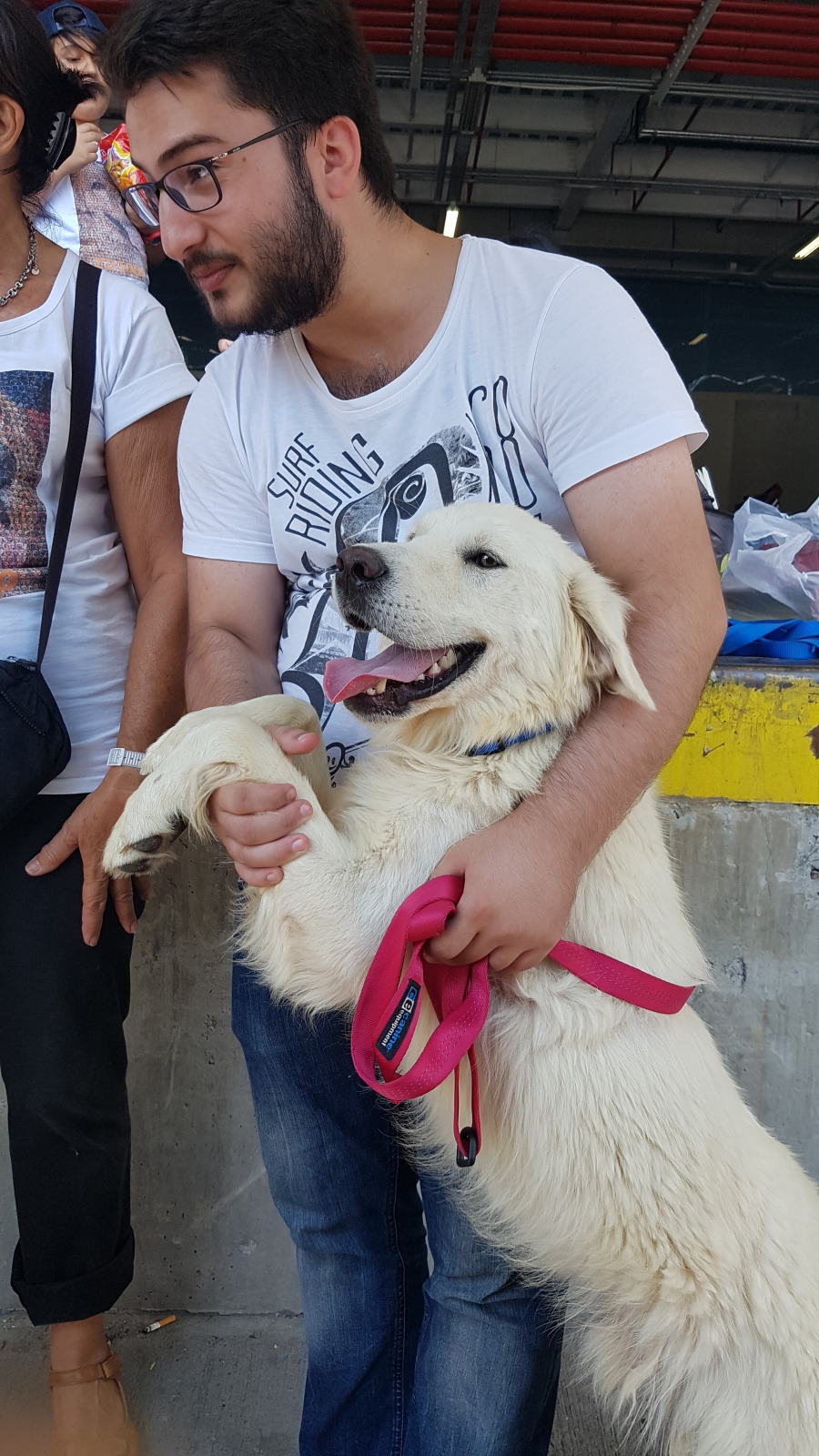 Volunteers play with the dogs outside the airport in Istanbul.