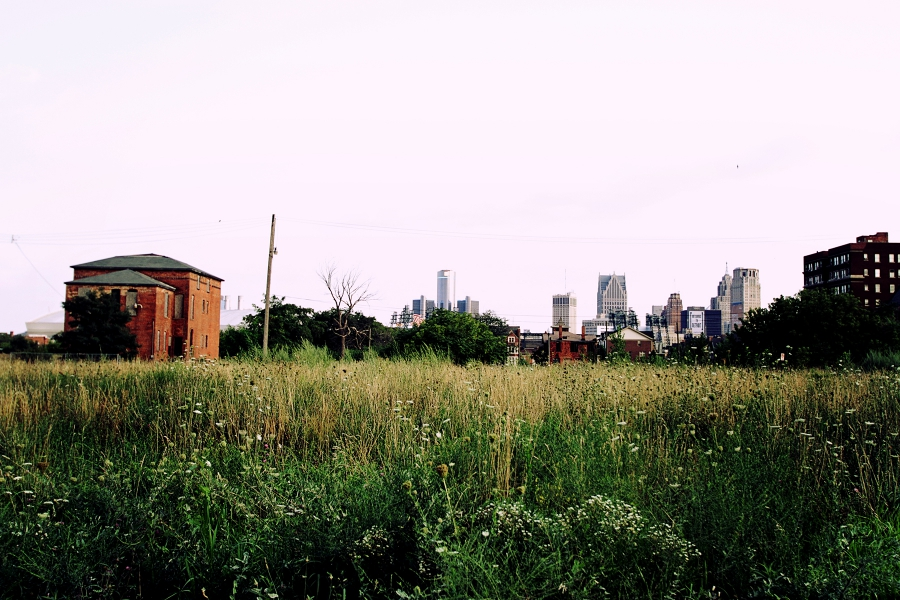 Grass on an empty lot, with city skyline in the background