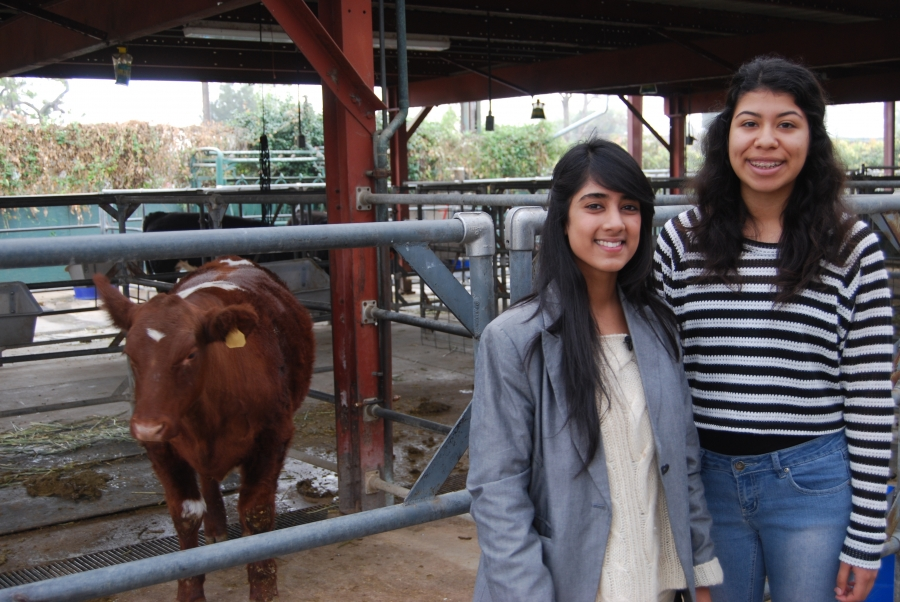 Urfia Abdul (left) and Jessica Solorzano, two of the roughly 500 students enrolled in the agriculture program at Buena Park High.