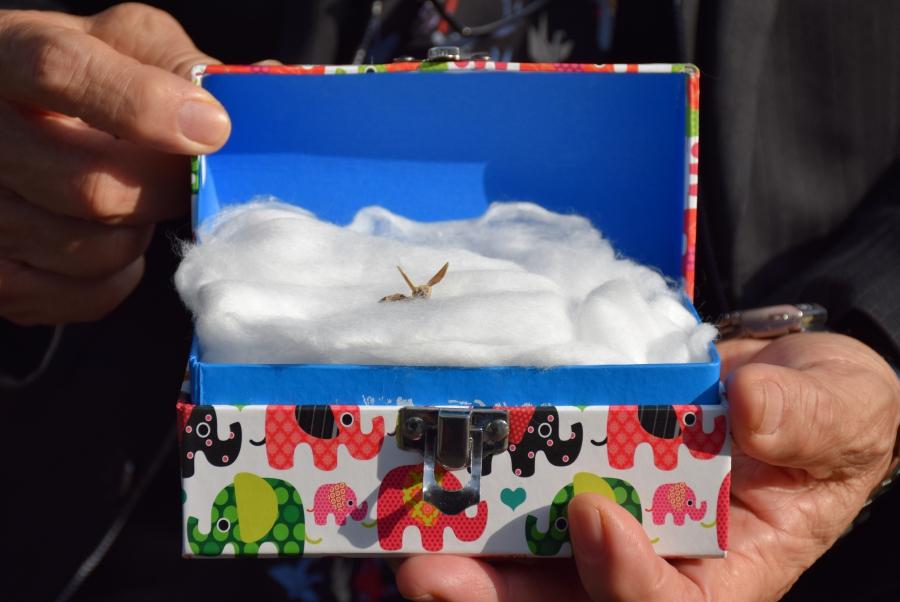 Sasaki's paper crane