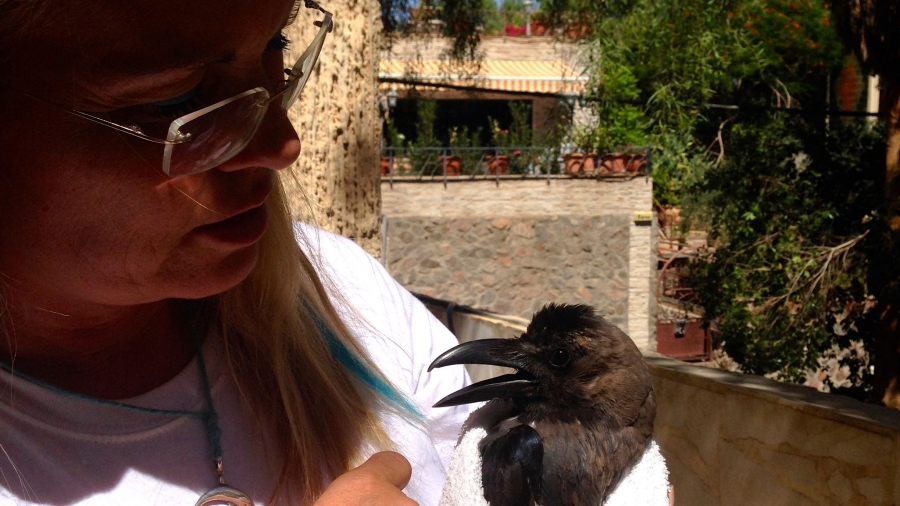 Daniela Schulenburg-Ortner, Eilat animal rights activist, holds Keanu, an injured crow she is rehabilitating in her backyard. She named it after the actor Keanu Reeves.