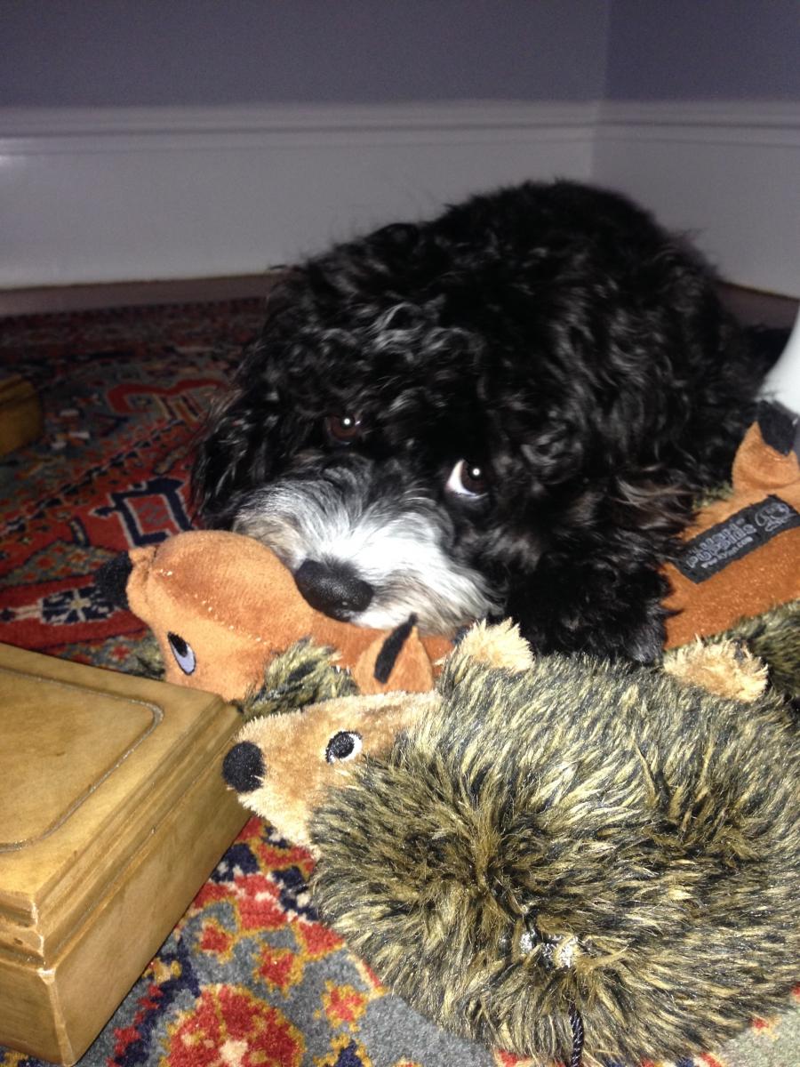 Zoe looking adorable chewing stuffed animals.